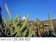 Купить «Jardin de Cactus , Cactus Garden, Guatiza, Lanzarote, Canary Islands, Spain», фото № 28268425, снято 20 января 2019 г. (c) age Fotostock / Фотобанк Лори