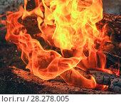 Купить «Languages of the flame in burning firewood», фото № 28278005, снято 9 марта 2018 г. (c) Алексей Маринченко / Фотобанк Лори