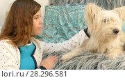 Купить «Little girl strokes a dog», видеоролик № 28296581, снято 14 августа 2017 г. (c) Tatiana Kravchenko / Фотобанк Лори
