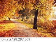 Купить «Осенний пейзаж», фото № 28297569, снято 6 октября 2017 г. (c) Зезелина Марина / Фотобанк Лори
