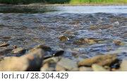Купить «Чистая прозрачная река», видеоролик № 28304429, снято 13 августа 2016 г. (c) Евгений Ткачёв / Фотобанк Лори