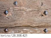 Купить «old wooden door with iron forged rivets», фото № 28308421, снято 24 октября 2017 г. (c) Татьяна Яцевич / Фотобанк Лори