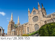 Купить «The Metropolitan Cathedral of the Immaculate Mother of God is the cathedral church of the Roman Catholic Archdiocese of Sydney, Australia», фото № 28309153, снято 17 декабря 2018 г. (c) BE&W Photo / Фотобанк Лори