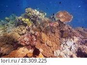 Купить «Coral formations, The Great Barrier Reef, Queensland, Australia», фото № 28309225, снято 23 марта 2019 г. (c) BE&W Photo / Фотобанк Лори
