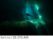Купить «Diver underwater in the Abismo Anhumas or Anhumas Abyss. This is a 80 metre deep lake, at the bottom of a 72 metre deep cave. Bonito area, Serra da Bodoquena (Bodoquena Mountain Range), Mato Grosso do Sul, Brazil, November 2017. Photographed for The Freshwater Project», фото № 28310445, снято 19 апреля 2018 г. (c) Nature Picture Library / Фотобанк Лори