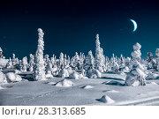 Купить «Сказочный лес. Снегурчатые деревья и месяц в небе», фото № 28313685, снято 23 марта 2018 г. (c) Наталья Осипова / Фотобанк Лори