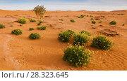 Купить «Oasis in Sahara desert panoramic  timelapse», видеоролик № 28323645, снято 6 апреля 2018 г. (c) Кирилл Трифонов / Фотобанк Лори