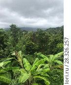 Купить «View of the rainforest in cloudy weather.», фото № 28326257, снято 21 июля 2019 г. (c) Женя Канашкин / Фотобанк Лори