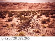 Купить «Desert landscape of province of La Rioja», фото № 28328265, снято 13 февраля 2017 г. (c) Яков Филимонов / Фотобанк Лори