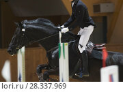 Купить «Young rider on black horse galloping at show jumping competition», фото № 28337969, снято 24 апреля 2018 г. (c) Константин Шишкин / Фотобанк Лори