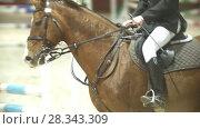 Купить «Man rider on stallion jumping over hurdle at show jumping competition, slow-motion», видеоролик № 28343309, снято 6 августа 2020 г. (c) Константин Шишкин / Фотобанк Лори