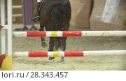 Купить «Young rider on black horse galloping at show jumping competition», видеоролик № 28343457, снято 6 августа 2020 г. (c) Константин Шишкин / Фотобанк Лори
