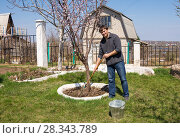 Купить «Мужчина сгребает граблями старую листву около дерева на дачном участке», фото № 28343789, снято 26 апреля 2018 г. (c) Гетманец Инна / Фотобанк Лори