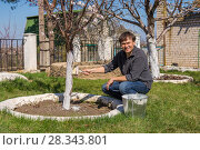 Купить «Мужчина обрабатывает стволы плодовых деревьев побелкой на дачном участке», фото № 28343801, снято 26 апреля 2018 г. (c) Гетманец Инна / Фотобанк Лори