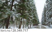 Купить «Walking in Central siberian botanical garden in Novosibirsk, Russia», видеоролик № 28349717, снято 23 апреля 2018 г. (c) Serg Zastavkin / Фотобанк Лори