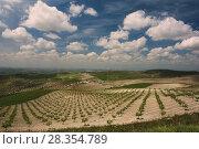 Cordovan countryside, Baena, Cordoba province, Region of Andalusia, Spain, Europe. Стоковое фото, фотограф José Lucas / age Fotostock / Фотобанк Лори