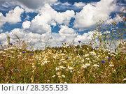 Купить «A field of brightly colored wild flowers on a sunny summer day», фото № 28355533, снято 6 августа 2012 г. (c) Наталья Волкова / Фотобанк Лори