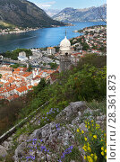 Montenegro. Top view on  Boka Kotor Bay, Old Town Kotor and beautiful 15th-century Church of Our Lady of Remedy (Crkva Gospa od Zdravlja) with a stone dome at summer day (2016 год). Стоковое фото, фотограф Виктория Катьянова / Фотобанк Лори