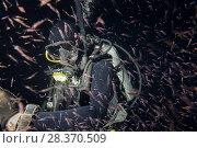 Купить «Scuba diver in the mass of krill in the night», фото № 28370509, снято 24 марта 2018 г. (c) Некрасов Андрей / Фотобанк Лори