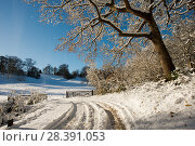 Купить «Snow scene from Lower Brockhampton, with Sessile Oak (Quercus petrea)  track and farm gate, Herefordshire, England, UK, December.», фото № 28391053, снято 18 августа 2018 г. (c) Nature Picture Library / Фотобанк Лори