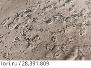 Купить «Footprints in wet sand, beach ground», фото № 28391809, снято 16 марта 2018 г. (c) EugeneSergeev / Фотобанк Лори