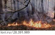 Купить «Fire in the forest, dry grass burns», видеоролик № 28391989, снято 17 октября 2018 г. (c) Антон Гвоздиков / Фотобанк Лори