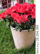 Купить «Flower in the garden», фото № 28394389, снято 6 июля 2016 г. (c) Jan Jack Russo Media / Фотобанк Лори