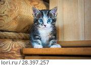 Купить «Котенок с пятном на носу kitten with stain on the nose», фото № 28397257, снято 30 апреля 2018 г. (c) Baturina Yuliya / Фотобанк Лори