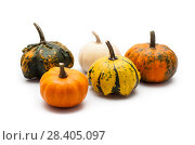 Купить «Colorful pumpkin and squash», фото № 28405097, снято 19 октября 2017 г. (c) Сурикова Ирина / Фотобанк Лори