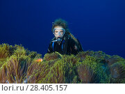 Купить «Female scuba diver looks on Big beautiful anemone - Magnificent Sea Anemone (Heteractis magnifica)», фото № 28405157, снято 13 марта 2018 г. (c) Некрасов Андрей / Фотобанк Лори