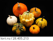 Купить «Colorful pumpkin and squash, Red Kuri», фото № 28405213, снято 19 октября 2017 г. (c) Сурикова Ирина / Фотобанк Лори