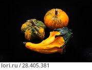 Купить «Colorful pumpkin and squash», фото № 28405381, снято 19 октября 2017 г. (c) Сурикова Ирина / Фотобанк Лори
