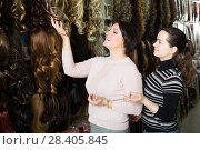 Купить «Female selecting clip-in natural hair extension», фото № 28405845, снято 17 октября 2018 г. (c) Яков Филимонов / Фотобанк Лори
