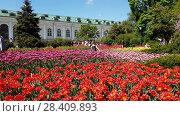 Купить «Moscow, Russia - May 12. 2018. Flowerbeds with tulips in Alexander Garden», видеоролик № 28409893, снято 13 мая 2018 г. (c) Володина Ольга / Фотобанк Лори
