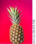 Купить «Large pineapple with peel, and stem with leaves on pink background», фото № 28410105, снято 22 декабря 2017 г. (c) Сергей Молодиков / Фотобанк Лори