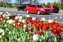 Купить «Тюльпаны на клумбе у дороги», фото № 28411445, снято 9 мая 2018 г. (c) Юрий Морозов / Фотобанк Лори
