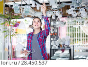 Купить «girl in lighter shop choosing modern glass chandelier for house interior», фото № 28450537, снято 16 февраля 2017 г. (c) Яков Филимонов / Фотобанк Лори