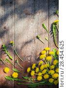 Купить «dandelions on old wooden background», фото № 28454625, снято 10 мая 2018 г. (c) Майя Крученкова / Фотобанк Лори
