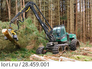 Купить «Timber harvesting machine felling and processing conifers, Inverness-shire, Scotland, August 2007», фото № 28459001, снято 22 сентября 2018 г. (c) Nature Picture Library / Фотобанк Лори