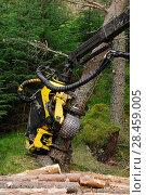 Купить «Timber harvesting machine felling and processing conifers, Inverness-shire, Scotland, August 2007», фото № 28459005, снято 19 июля 2018 г. (c) Nature Picture Library / Фотобанк Лори