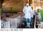 Купить «Portrait of happy veterinarians in facial masks», фото № 28460181, снято 25 мая 2018 г. (c) Яков Филимонов / Фотобанк Лори
