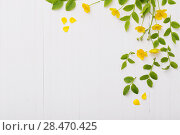 Купить «floral pattern with yellow buttercups on a white background», фото № 28470425, снято 24 мая 2018 г. (c) Майя Крученкова / Фотобанк Лори