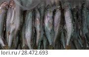 Купить «Женская рука выбирает замороженную рыбу корюшку в витрине рыбного рынка», видеоролик № 28472693, снято 21 мая 2018 г. (c) А. А. Пирагис / Фотобанк Лори