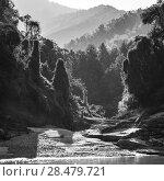 Купить «Trees in forest at riverside, River Mekong, Sainyabuli Province, Laos», фото № 28479721, снято 12 декабря 2016 г. (c) Ingram Publishing / Фотобанк Лори