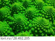 Купить «Romanesco broccoli cabbage marco. Nature fractal surface with spital pattern.», фото № 28492205, снято 20 сентября 2019 г. (c) Ingram Publishing / Фотобанк Лори