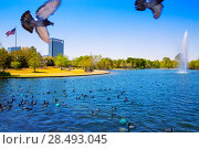 Купить «Houston Mc govern lake with doves spring water and green grass in Texas», фото № 28493045, снято 23 октября 2018 г. (c) Ingram Publishing / Фотобанк Лори
