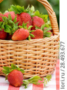 Купить «Wicker basket fool of organic strawberries», фото № 28493677, снято 22 июня 2018 г. (c) Ingram Publishing / Фотобанк Лори