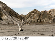 Купить «Bottom of a lifeless valley in the desert mountains, covered with a crust of dried clay, with a deer skull lying in the foreground», фото № 28495481, снято 20 мая 2018 г. (c) Евгений Харитонов / Фотобанк Лори