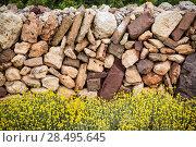 Masonry stonewall in spring with flowers at Menorca Balearic islands. Стоковое фото, фотограф Tono Balaguer / Ingram Publishing / Фотобанк Лори