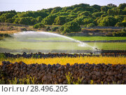 Купить «Irrigation spring on cereal fields in Menorca balearic islands», фото № 28496205, снято 26 мая 2013 г. (c) Ingram Publishing / Фотобанк Лори